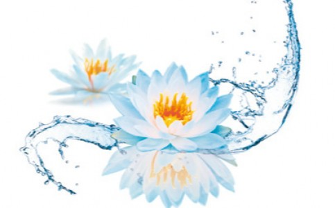 Water-Lotus